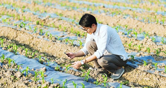 A researcher crouched over a row of plants using a sensor to measure some attribute of crops on a farm..